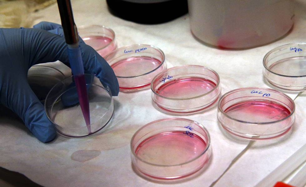 La Terapia Génica y la Terapia Celular