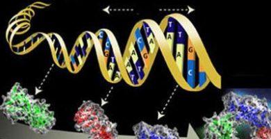 Enfoques de la terapia génica