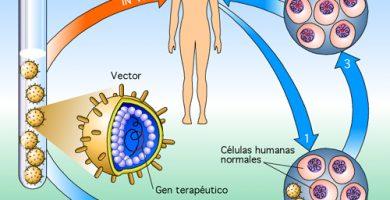 Proceso de la terapia génica