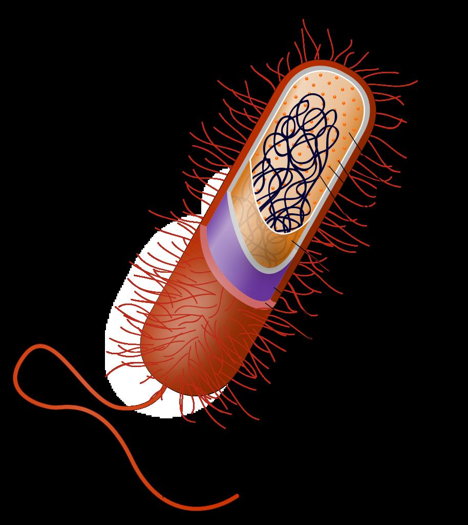 terapia génica con RNA de interferencia