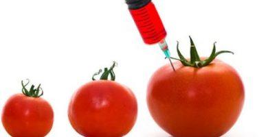 terapia génica y organismos transgénicos