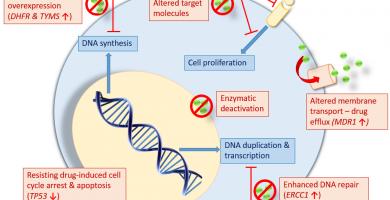 terapia génica oncológica